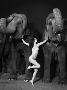Dancing with Elephants
